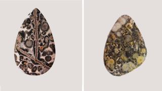 Leopard Skin Jasper Comparison